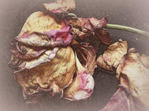A rose is a rose however faded