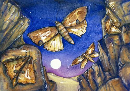 17-Moth