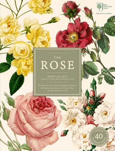 xthe-rose.jpg.pagespeed.ic.ItxAwr4rFZ.jpg