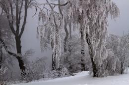 snowed-in-viennese-woods-austria-1